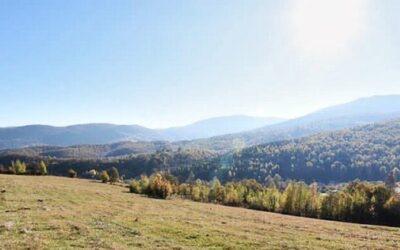 Брезовата гора в Бойковец – най-голямата на Балканския полуостров